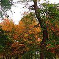 Linxe automne 2410155