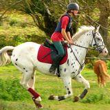 Le département du cheval Les Yvelines 78