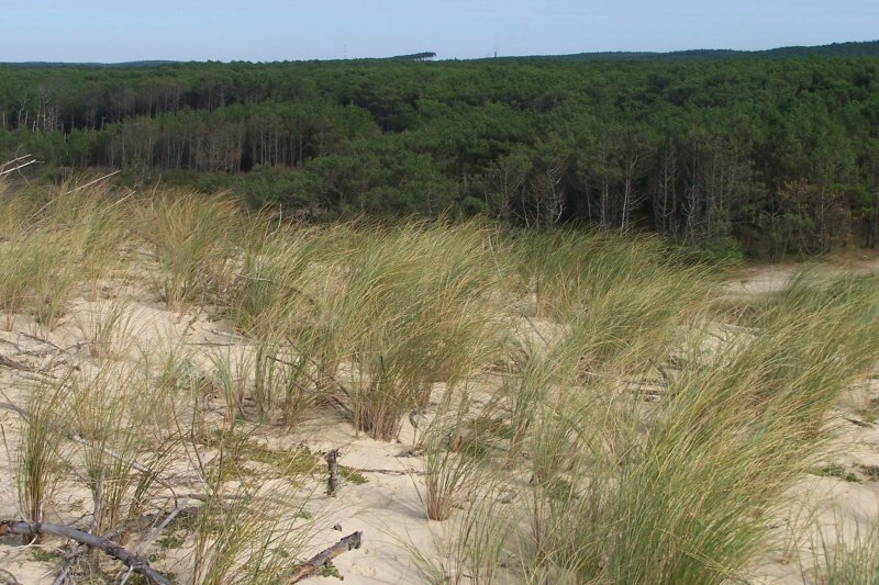 dune_foretMF2