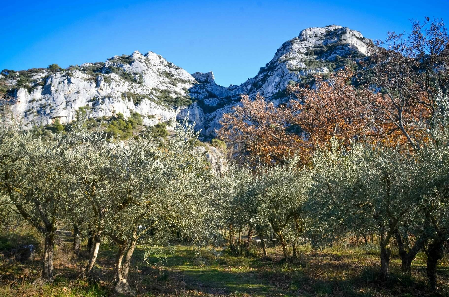 Balade dans le Parc National du Luberon