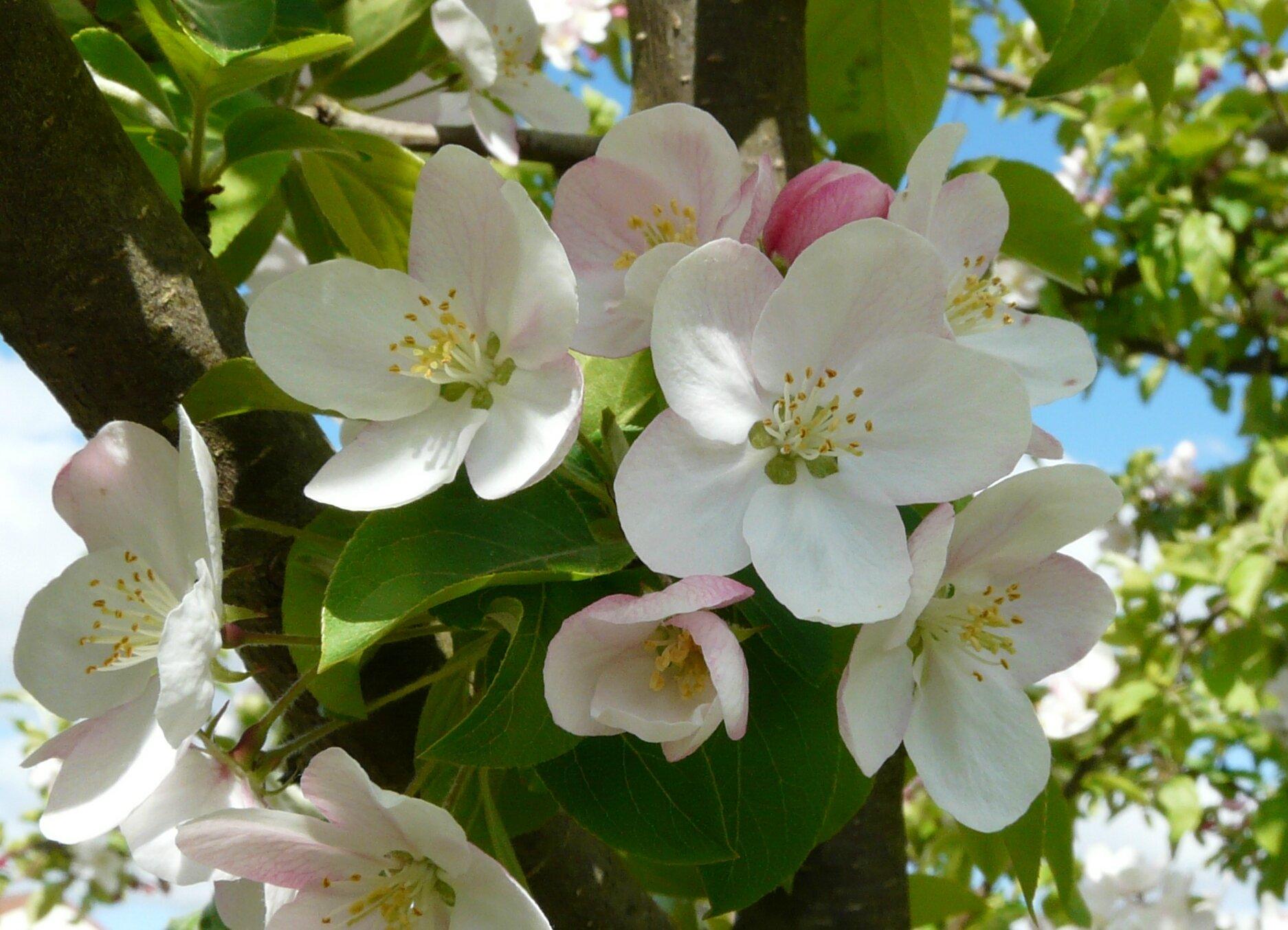 Vive le printemps le jardin de marguerite rose for Vive le jardin montaigu