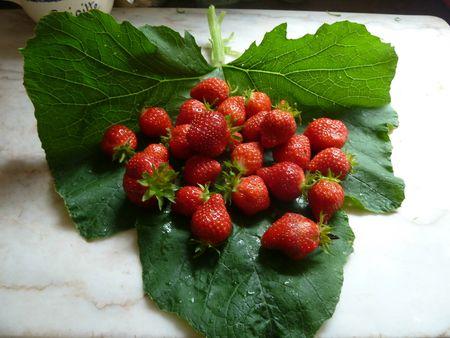 23-fraises (2)