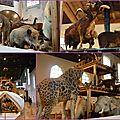 Lille 3000 - de drôles d'animaux à l'hospice comtesse