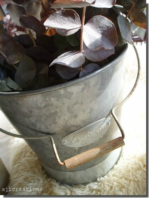 eucalyptus et zinc