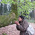 Hêtres de bibracte-mont beuvray