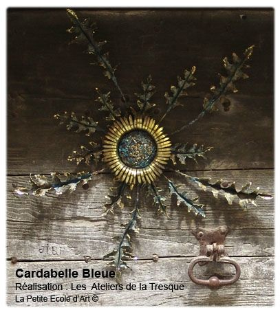 cardabelle bleue