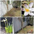Mon jardin explose - hagen min eksploderer