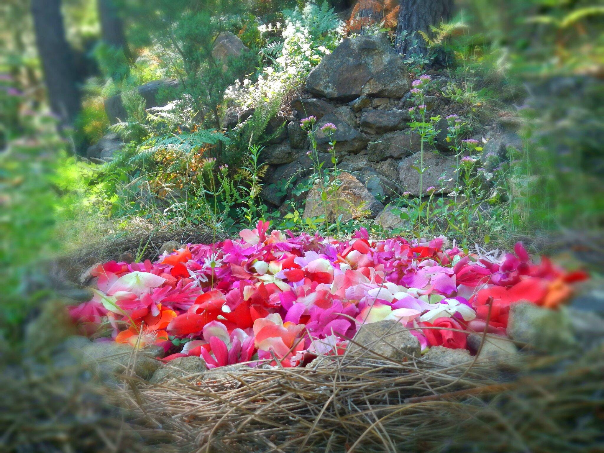 cercle de fleurs rouges et roses
