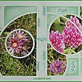 Fleurs de montagne 004
