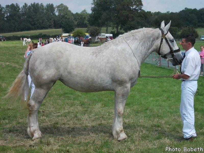 CASTYLLE de la Lys - Concours National - Samer (62) - 26 juillet 2014 - 6e (2 ans grandes tailles)