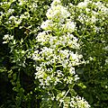 fleurs-de-breche (63)