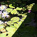 bassin fleurs