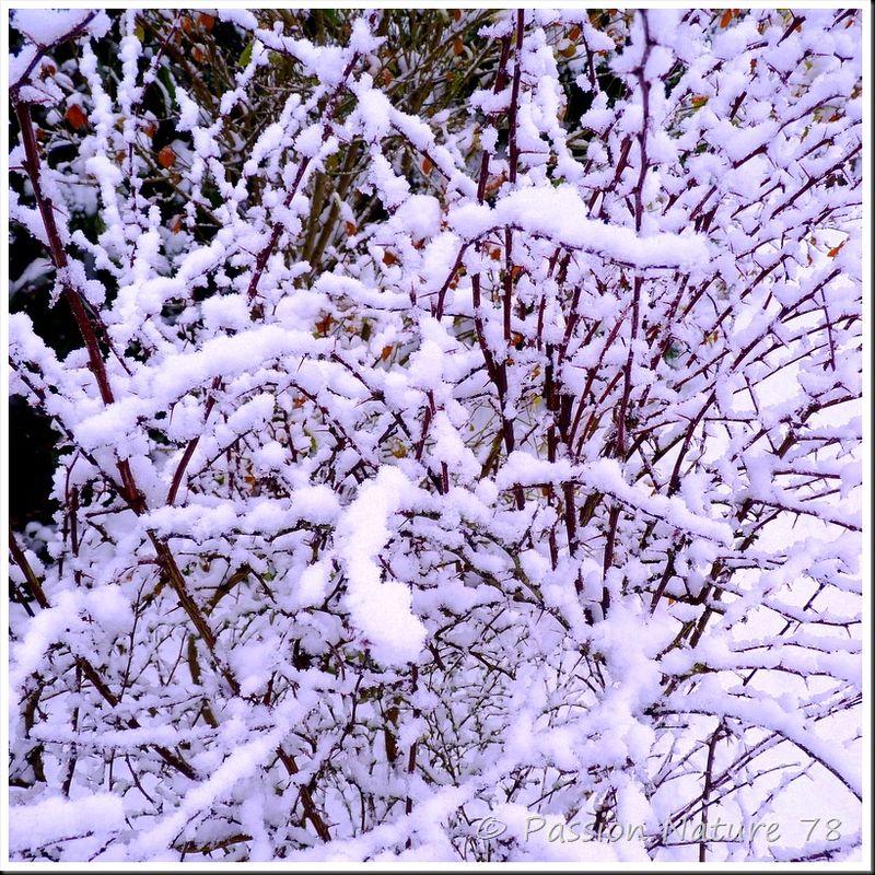 Notre jardin sous la neige