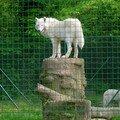 loup blanc.zoo Vincennes