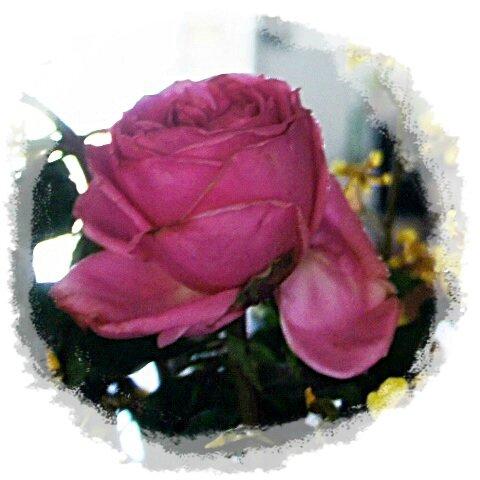 BOUQUET FLEURS ROSE DE PRES