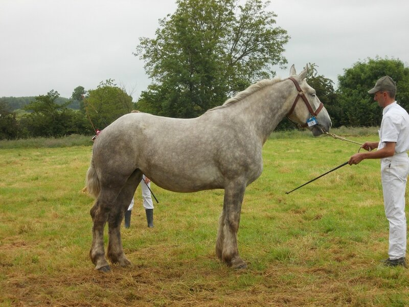 Dalia 15 - 21 Juin 2016 - Concours d'élevage local - Bonningues les Ardres - 2e (3 ans)