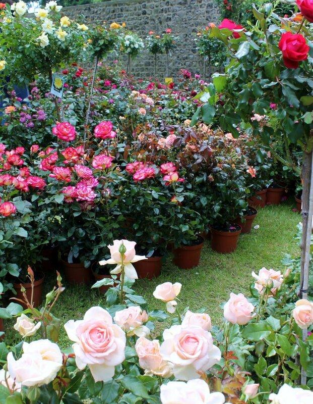 Fête de la rose Veules-les-Roses 014
