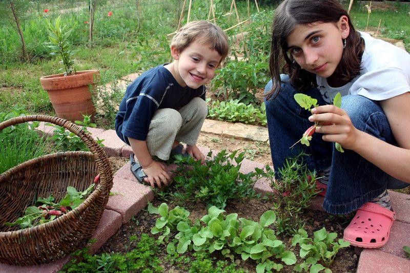 Premi re r colte les radis le jardin des cerises vertes - Quand cueillir les radis ...