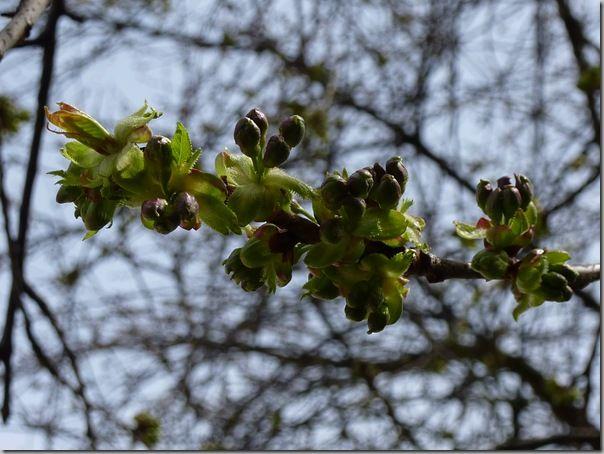 Jardin-20.03.2011 055
