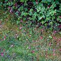 pluie de pétales roses