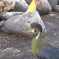 beaux oiseaux aux Canaries..Normal hihihi