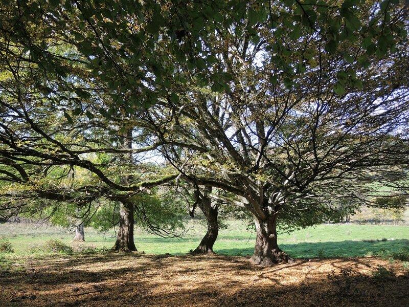 Chagnon, arbres (58)