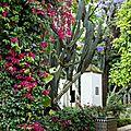 w_Fleurs palais_20170511_4760