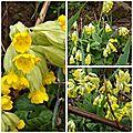 Jardin avril (6)