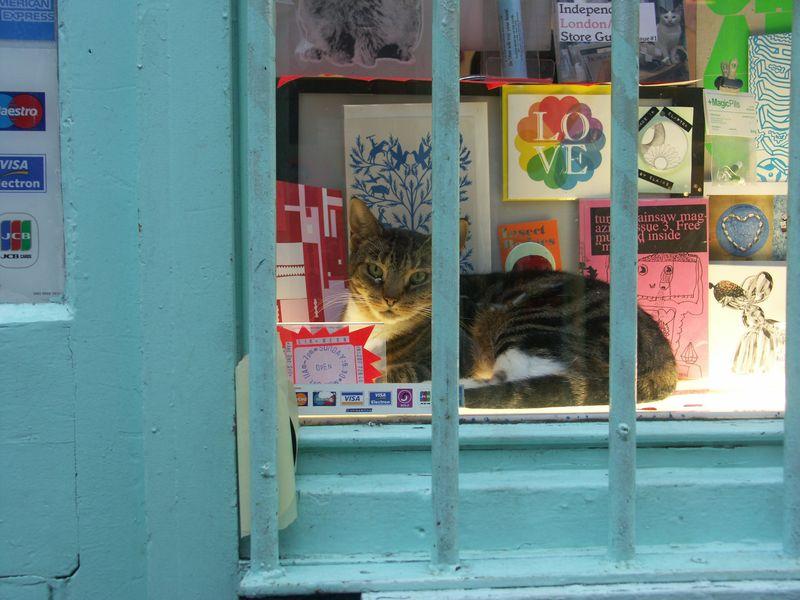 cat_store