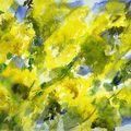 Mimosa dans le Mistral