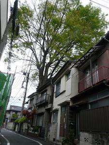 Canalblog_Tokyo03_20_Avril_2010_039