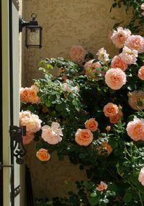 rosier volet