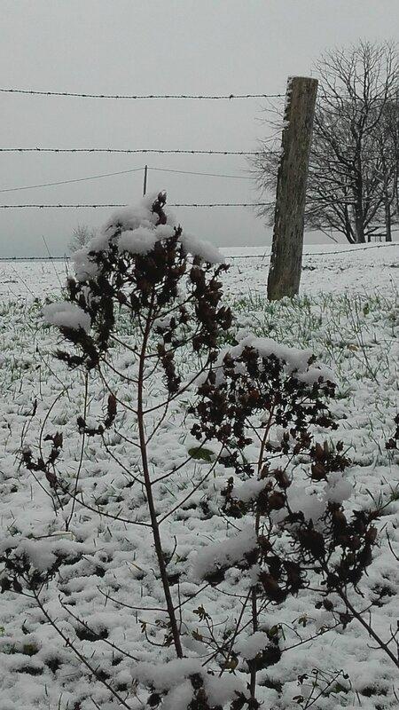 Branche neige canalblog