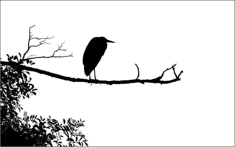 ville ombre chinoise heron arbre 1 080915