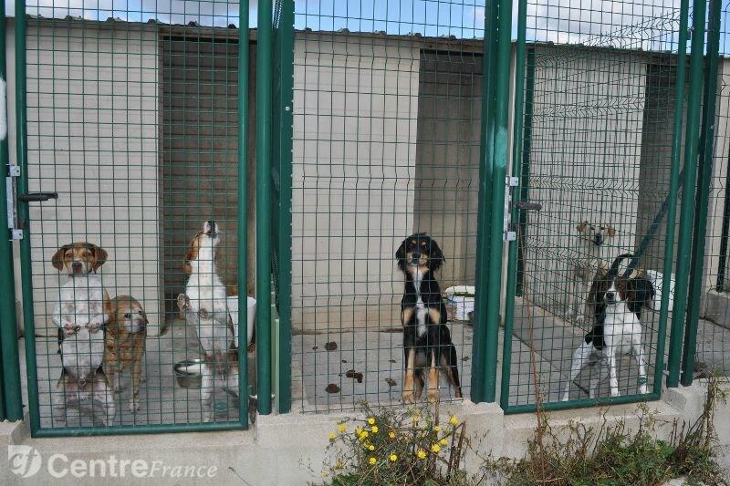 sept-jeunes-chiens-males-attendent-des-maitres-a-la-souterra_830306