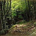 Deux heures en forêt