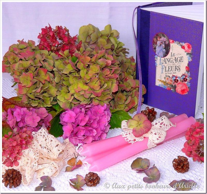 Hortensias aux couleurs de l'automne (1)
