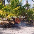 45_BBQ sur l'île aux récifs