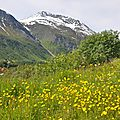 421-Alpes lyngen