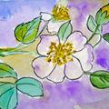 Apple flowers fleurs de pommier