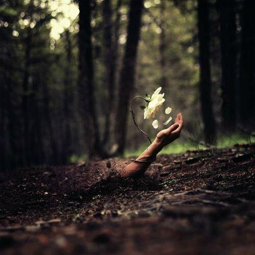 Magie Naturelle : Passion