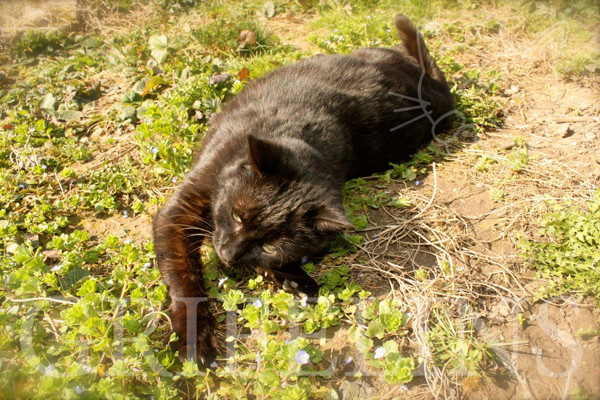 pourquoi mon chat perd autant de poils