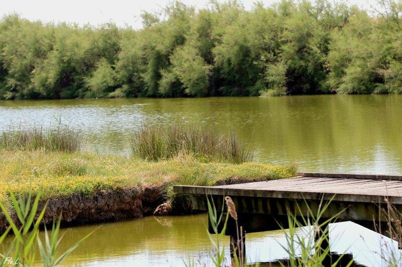 Plan d'eau à Saint-Trojan (Oléron)
