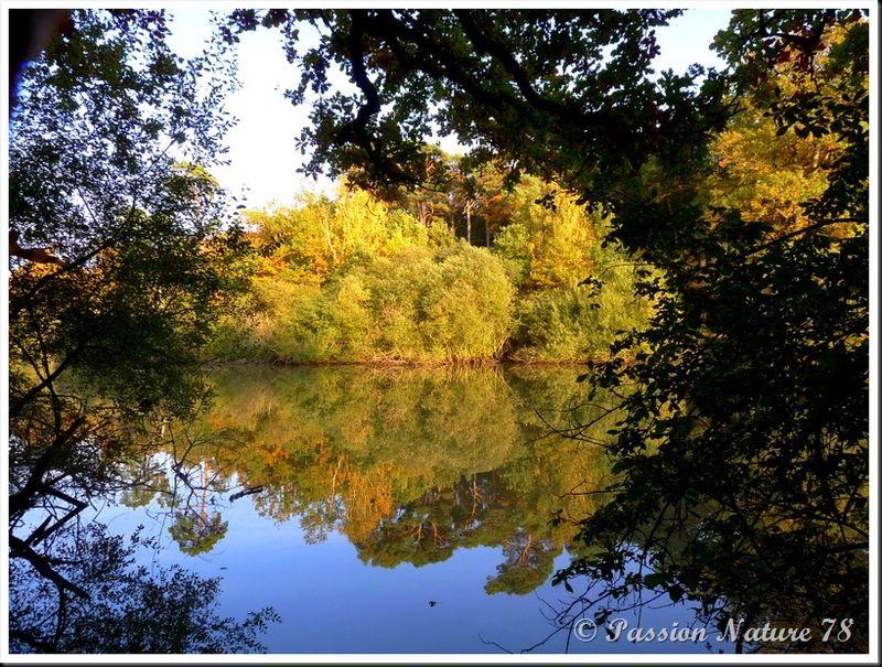 L'étang d'Or (25)