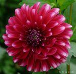 fleur_trianon_6