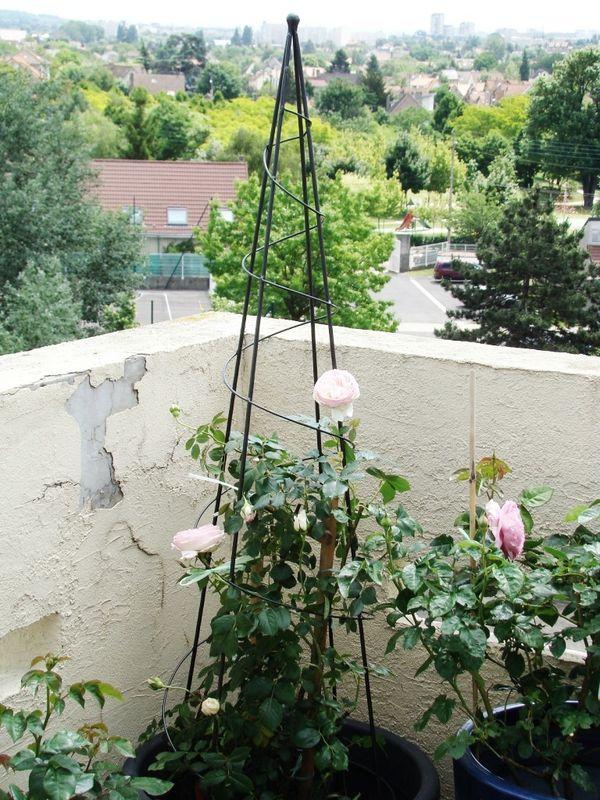nouveau rosier voir la vie en rose. Black Bedroom Furniture Sets. Home Design Ideas
