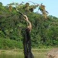 L'arbre aux nids