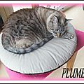 PLUME (1)