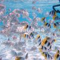 12_poissons du lagon