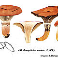 IH1 pl 69 498 Gomphidius roseus